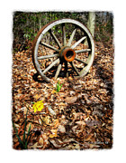 Hdr Effects Photos - Wagon Wheel Daffodil by Brian Wallace