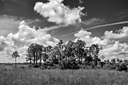 Everglades National Park Posters - Wagon wheel Road 1 BW Poster by Rudy Umans