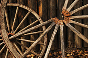 Brown Leaves Prints - Wagon Wheels Print by Larysa Luciw