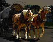Horses Digital Art - Wagon Wheels  by Steven  Digman