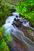 Wahkeena Creek Framed Prints - Wahkeena Creek - Columbia Gorge OR Framed Print by Michael Brandt