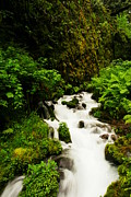 Pacific Northwest Rivers Prints - Wahkeena Creek Print by Jeff  Swan