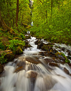 Lush Green Framed Prints - Wahkeena Falls Framed Print by Darren  White