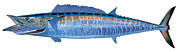 Striped Marlin Prints - Wahoo Print by Carey Chen
