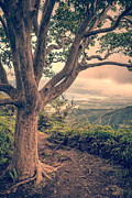 Edward Fielding - Waihee Ridge Trail Maui Hawaii