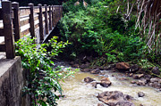 Waimea Falls Prints - Waimea Valley Bridge Print by Lisa Cortez