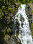 Waimea Falls Prints - Waimea Waterfall Print by Christine Cole