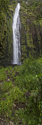 Brad Scott Prints - Waimoku Falls Panorama Print by Brad Scott