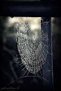 Spider Web Art - Waiting and waiting and waiting for lunch by Gail Girvan