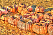 Harvest Art Prints - Waiting At The Pumpkin Patch Print by Heidi Smith