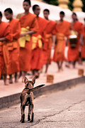 Buddhist Photo Prints - Waiting for Master Print by Justin Albrecht