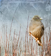 Sparrow Mixed Media - Waiting for Spring by Elaine Manley