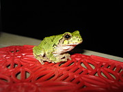 Frog Pyrography - Waiting for Supper by Janis  Cornish