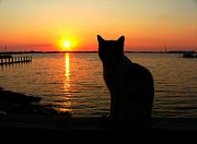 Artography Metal Prints - Waiting for the Shrimpers to Come in With Their Catch Metal Print by Julie Dant