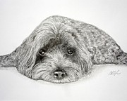 Puppies Drawings Framed Prints - Waiting for You Framed Print by Chris Fraser