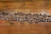 Flocks Prints - Waiting Out the Storm Print by Betsy A Cutler East Coast Barrier Islands