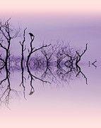 Bare Trees Art - Waiting by Sharon Lisa Clarke