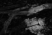 Forest Floor Photos - Waking The Dead by Odd Jeppesen