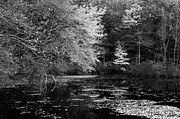 Walden Pond Framed Prints - Walden Pond Framed Print by Christian Heeb