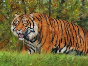 Forest Bird Paintings - Walk in the Forest. Amur Tiger by David Stribbling