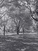 Walk In The Park Print by Kim Hojnacki