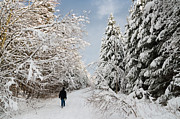 Snow-covered Landscape Photo Prints - Walk in the winterly forest with lots of snow Print by Matthias Hauser