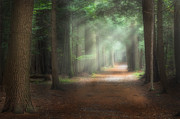 The Trees Photo Prints - Walk In The Woods Print by Bill  Wakeley