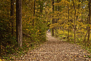Indiana Dunes Photos - Walk slowly by Lynne Dohner