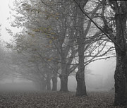 Bare Trees Art - Walk with me - Chestnut Trees in Fog by Georgia Fowler