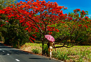 Mauritius Prints - Walking along the Road. Mauritius Print by Jenny Rainbow
