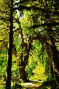 Tall Trees Prints - Walking Among The Giants  Print by Jeff  Swan