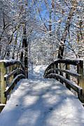 Walking In A Winter Wonderland Print by Kristin Elmquist