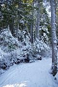 Marilyn Wilson - Walking in a Winter Wonderland