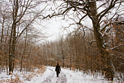 Winterly Forest Posters - Walking in the winterly woodland Poster by Matthias Hauser