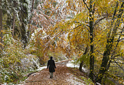 Yellow Leaves Prints - Walking into winter - beautiful autumnal trees and the first snow of the year Print by Matthias Hauser