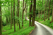Bright Green Posters - Walking on a Country Road - Appalachian Mountain backroad Poster by Matt Tilghman