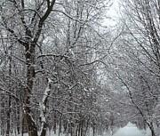 Gail Matthews - Walking Path in Winter