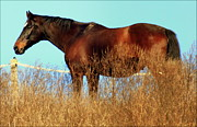 Brown Horses Posters - Walking Tall Poster by Karen Wiles