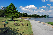 Canada Geese Prints - Walking The Delaware Print by Skip Willits
