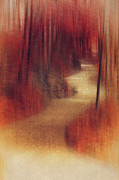 Forest Prints - Walking to... Print by Angela Doelling AD DESIGN Photo and PhotoArt