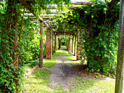 Florida Flowers Photos - Walkway by Carey Chen