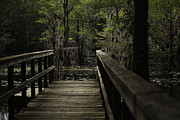 Caddo Framed Prints - Walkway Framed Print by John Hesley