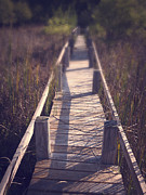 Acadia National; Park Prints - Walkway Through The Reeds Appalachian trail Print by Edward Fielding