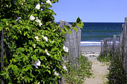 Nantasket Beach Prints - Walkway to the Beach Print by Nancy A Santry
