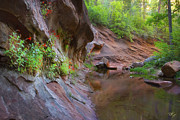 Wall Garden Print by Peter Coskun
