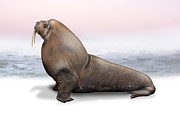 Oceans Drawings Prints - Walrus Odobenus rosmarus - Morse - Morsa - Mursu - Rostungur - Yupik - Inupiat - Inuit - Eskimo Print by Urft Valley Art