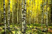 Saija  Lehtonen - Wandering in the Woods