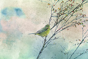 Huckleberry Mixed Media Posters - Warbler in a Huckleberry Bush Poster by Peggy Collins