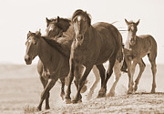 Wild Horses Prints - Warbonnet Moves His Family Print by Carol Walker