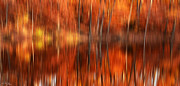 Red Maple Trees Prints - Warmth Impression Print by Lourry Legarde